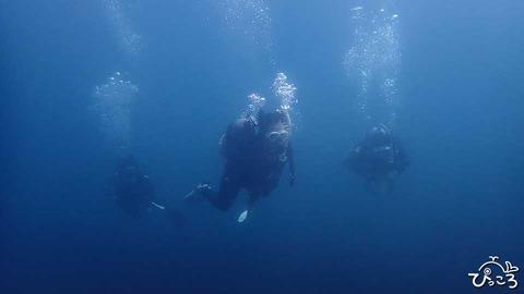 20190831_diver