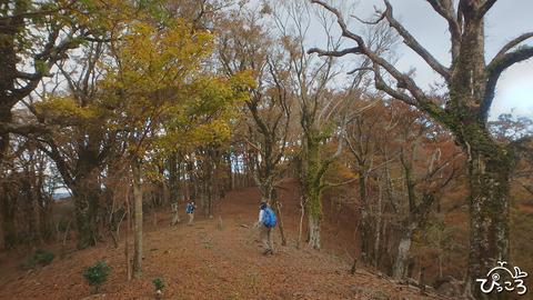 1105_伊豆山稜線歩道