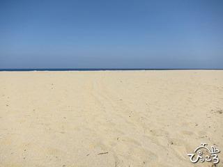 ウミガメの産卵地 永田浜