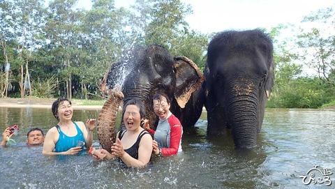 象と水浴び