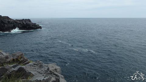 海を泳いでます