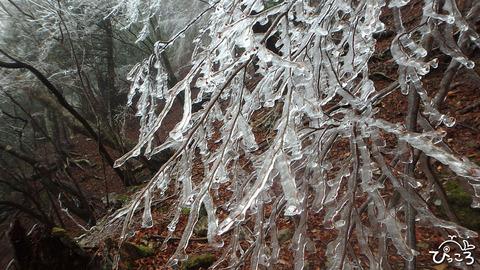 0131_雨氷
