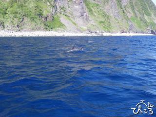 イルカの背びれ