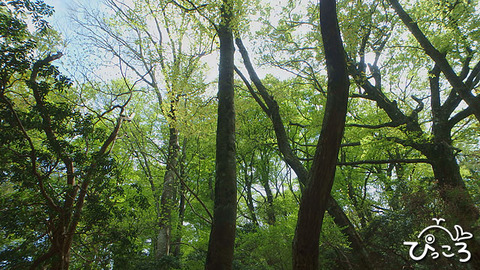 新緑の森@天城山