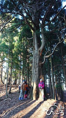 191208_杉の巨木