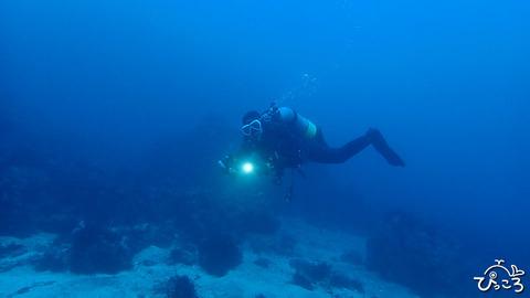 冬らしからぬ海の中でした