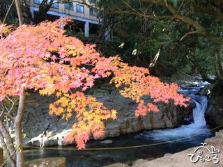 2012-12-11カニ滝ともみじ