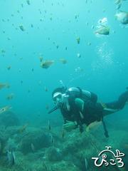 魚と戯れるダイバー
