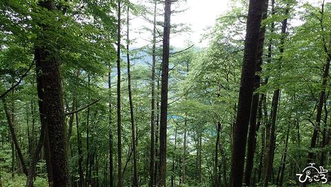 0624_木々の向こうには西湖