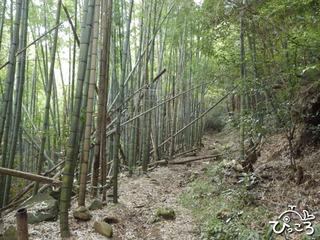 竹やぶの中