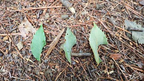 0626_緑の落ち葉
