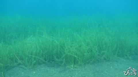 0926_水草いっぱい