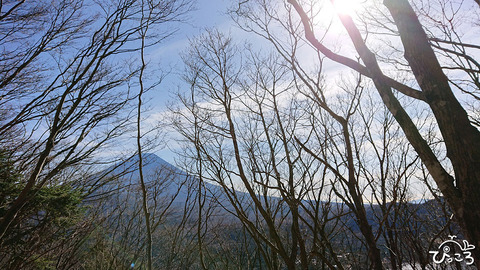 落葉した枝ごしの富士山_