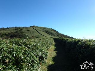 達磨山への稜線
