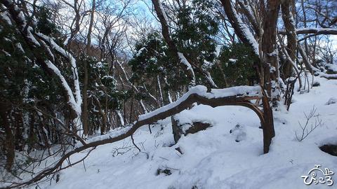 0212_tree