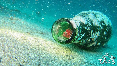 ハオコゼ幼魚