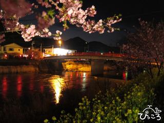 2013-3-2河津桜と菜の花