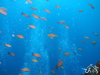 浮島根の群れ