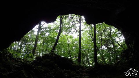 0624_洞窟内からみた森