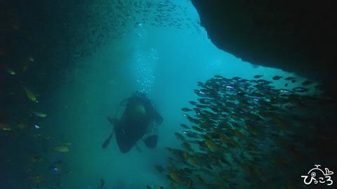 魚の群れの中へ_P9120488