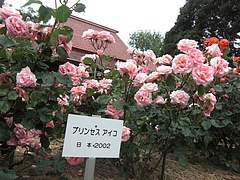 CIMG0457