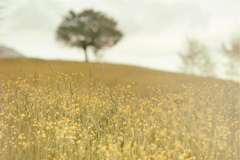 130506黄色い草花