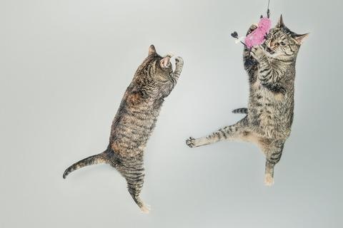 躍動的な猫たち