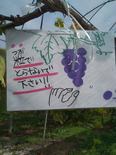 5紫波観光ぶどう園