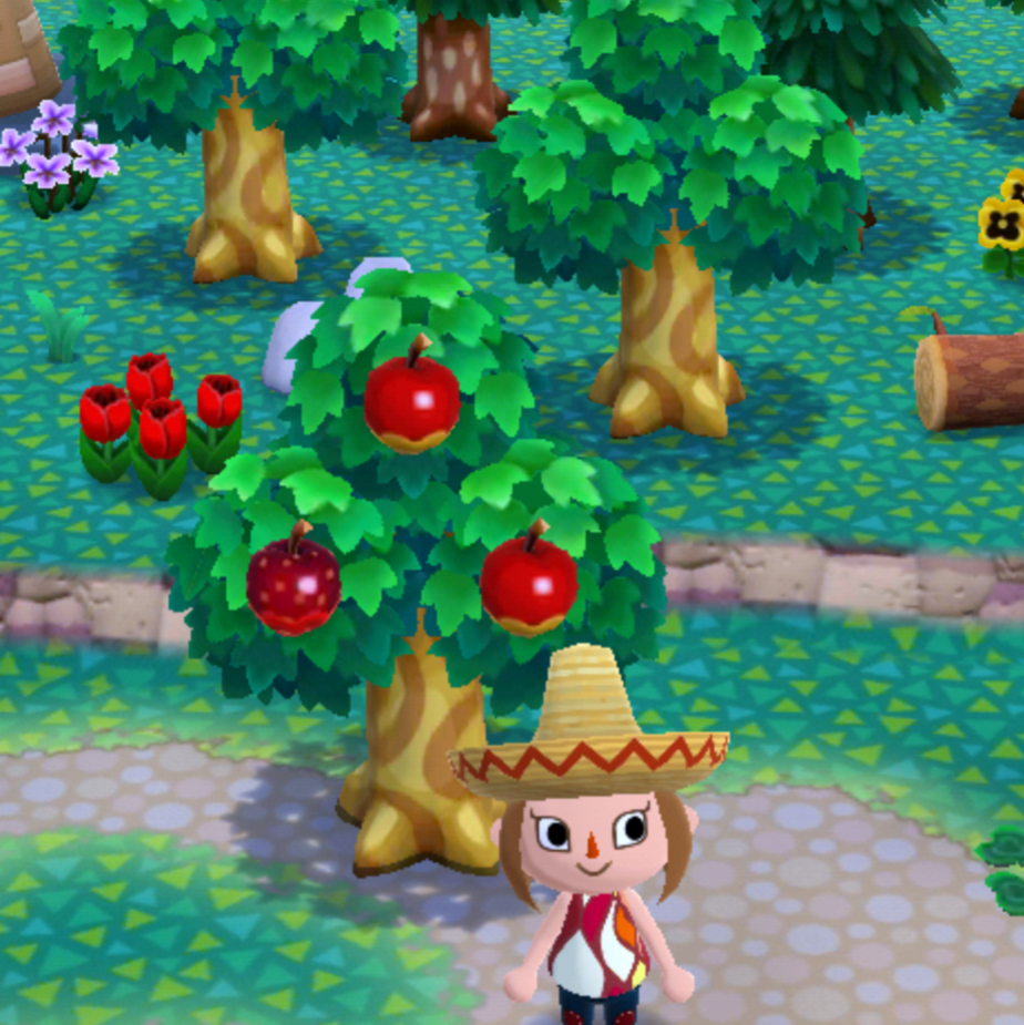 森 フルーツ ポケ おいしい
