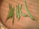 いんげん収穫