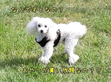 20161027_161146 (2)