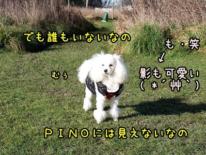 20170719_110216 (2)