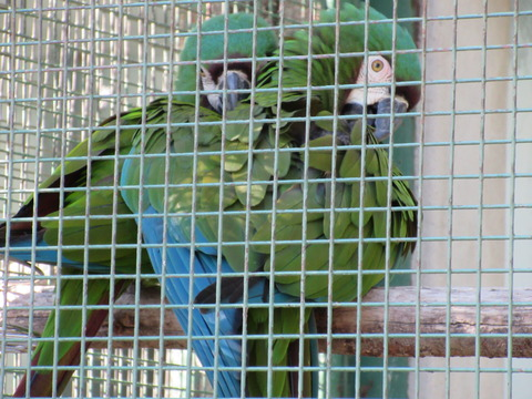 東山動物園 H27 1月24日 035