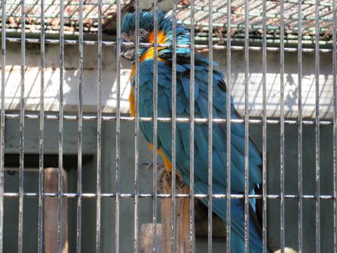 東山動物園 H27 1月24日 032