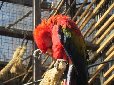 東山動物園 H27 1月24日 078