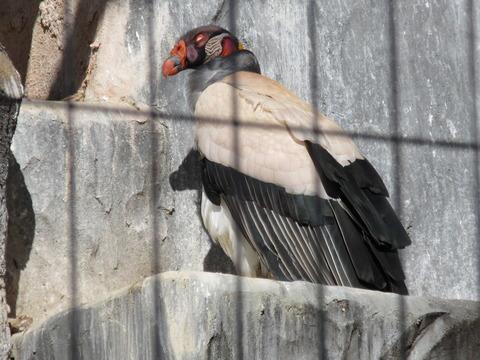 東山動物園 H27 1月24日 001