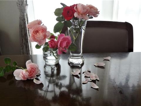 gardenroses