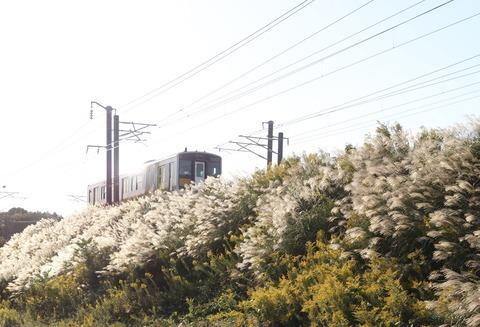 電車とススキ