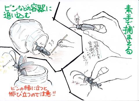 カミキリムシの捕まえ方図
