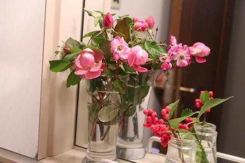 20210121冬のバラ