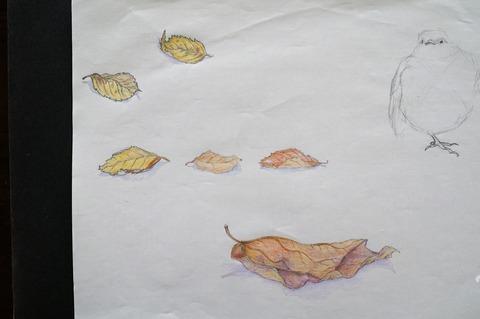 柿とユスラウメの落ち葉