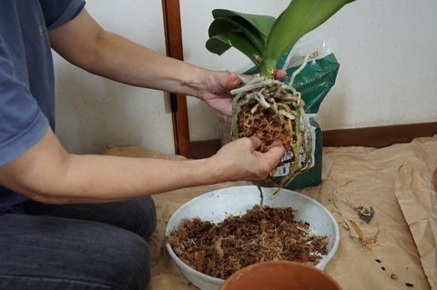 ミズゴケで植える