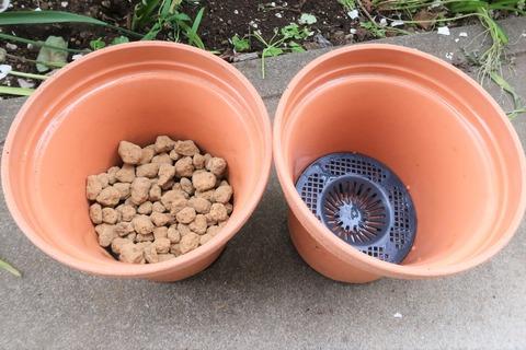 植え方赤玉大粒