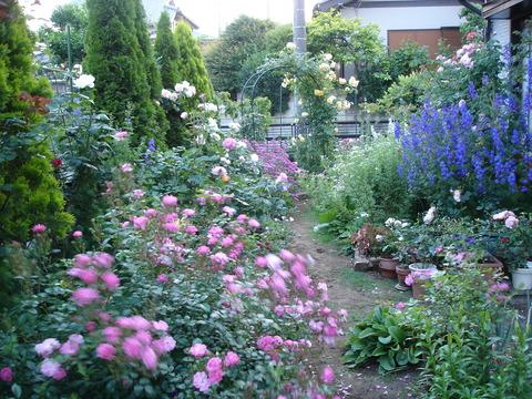 200765庭の様子