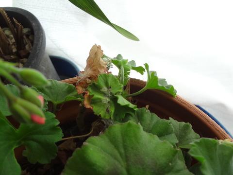 葉を折りたたんだ家に暮らす虫