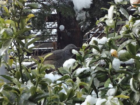 2月の雪の日