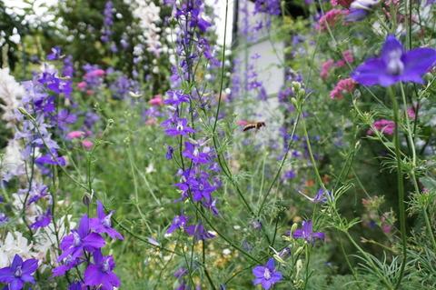 6月の庭でアシナガバチ