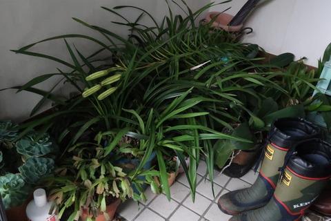植物の避難