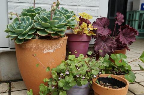 玄関前の鉢
