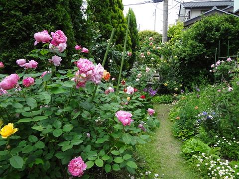 20120530バラの咲く庭に